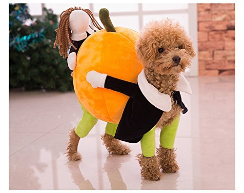 Top 5 Best Halloween Costumes for Dogs Reviews