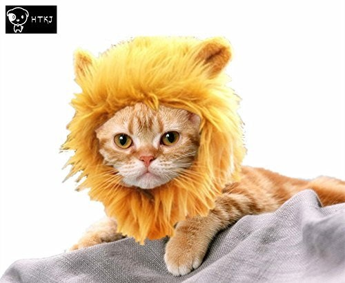Top 5 Best Halloween Costumes for Cats